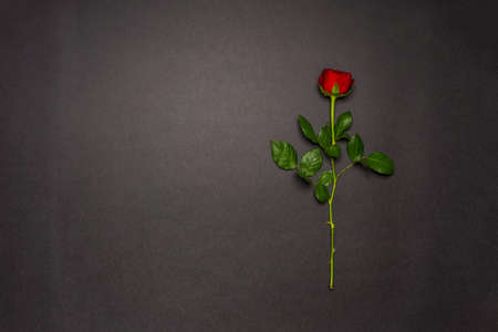 Single rose flower on black background. Mourning, condolence, commemoration concept. Mourning card with space for text. Flat lay, top view. Stock fotó