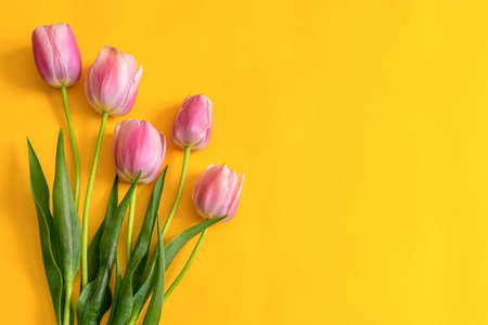 Colorful pink tulips on bright yellow paper background. Beautiful spring floral mock up for greeting card. Flat lay, top view, copy space Stock fotó