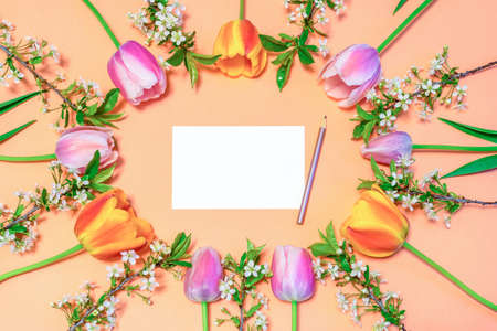 Oval frame made of colorful pink and orange tulips and cherry blossom twigs on peachy paper background with white blank card and pencil. Beautiful spring layout. Floral mock up for greeting card.