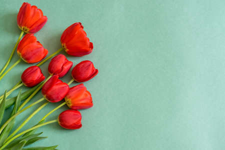 Colorful red tulips on green paper background. Beautiful spring floral mock up for greeting card. Flat lay, top view, copy space
