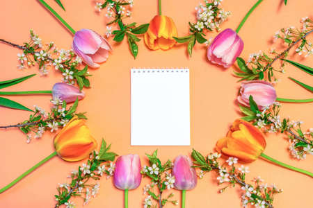 Oval frame made of colorful pink and orange tulips and cherry blossom twigs on peachy paper background with white notebook sheet. Beautiful spring layout. Floral mock up for greeting card. Flat lay