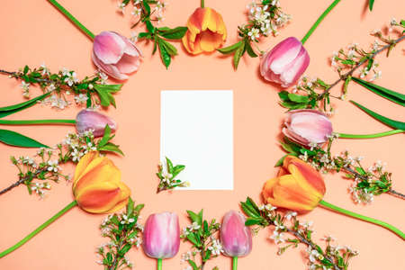 Round frame made of colorful pink and orange tulips and cherry blossom twigs on peachy paper background with white blank card. Beautiful spring layout. Floral mock up for greeting card. Flat lay