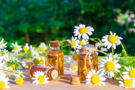 Chamomile essential oil in small glass bottles with camomile daisy flowers on wooden table in garden. Aromatherapy, phytotherapy, alternative medicine, spa and massage concept.