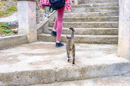 Female legs and little kitten climbing up on stair steps. Young tourist calling cute abandoned hungry kitten. Authentic lifestyle moments. Pets protection concept. Standard-Bild