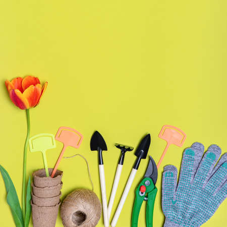 Fresh tulips flower, seedling pots, ball of twine, garden tools and gloves on light pastel background. Creative composition. Gardening, spring work concept. Flat lay, top view, copy space.