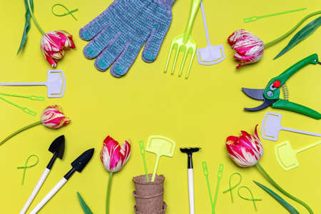 Fresh tulips flowers, seedling pots, garden tools, signs and gloves on light pastel background. Creative composition, springtime. Gardening, spring work concept. Flat lay, top view, copy space.