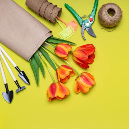 Fresh tulips flowers, seedling pots, ball of twine, garden tools and signs on light pastel background. Creative composition. Gardening, spring work concept. Flat lay, top view, copy space. Standard-Bild