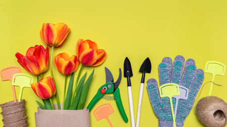 Fresh tulips flowers, seedling pots, ball of twine, garden tools and gloves on light pastel background. Creative composition. Gardening, spring work concept. Flat lay, top view, copy space.