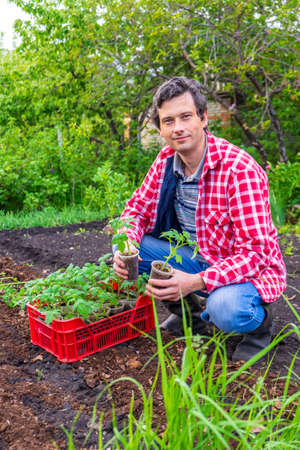 Farmer man transplanting tomato seedlings into open ground against green garden and country house. Spring work in kitchen-garden, vegetable crop cultivation, farming concept. Reklamní fotografie
