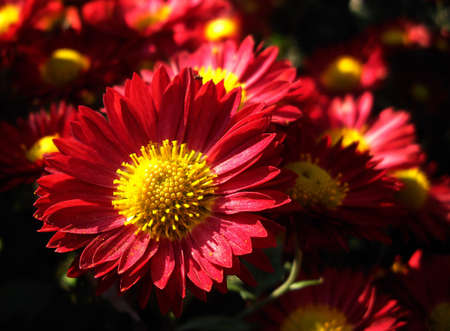 Autumn flowers close up photo