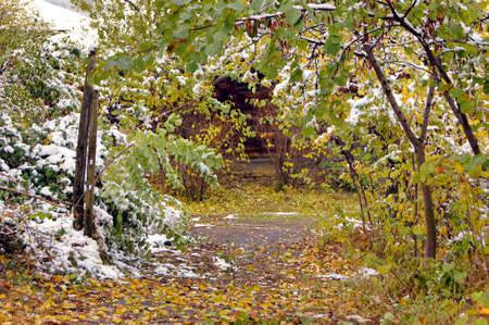 Autumn time: colorful leaves of the tree covered with snow and rural road