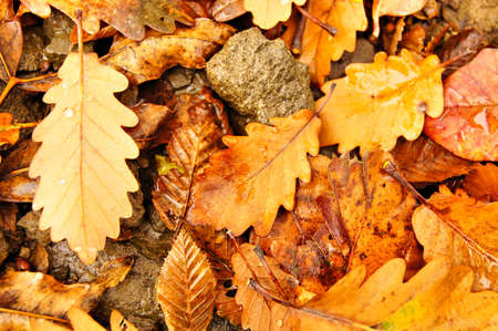 Autumn time: closeup of autumn leaves