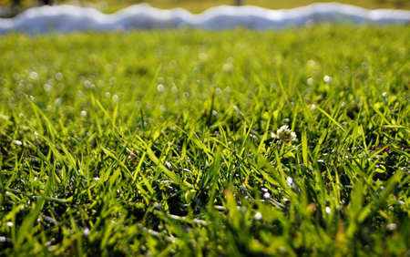 Green grass in sunny day Stock Photo - 12074664