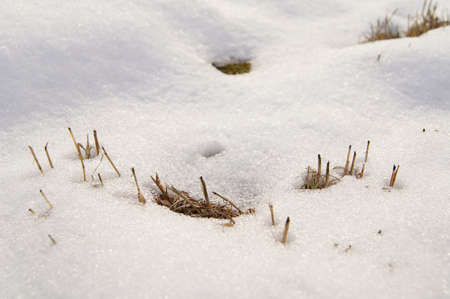 old grass under snow  Stock Photo - 12074676