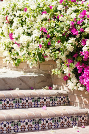 Courtyard of mediterranean villa with ceramic tile walkway and blooming bushes in Egypt              Stockfoto