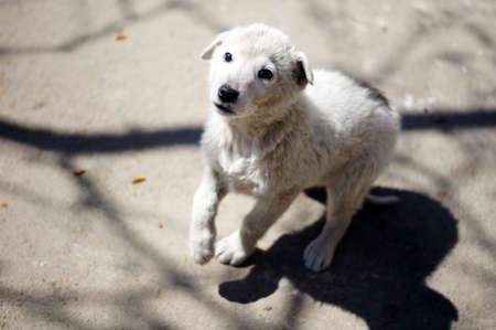 Little homeless dog outdoor photo