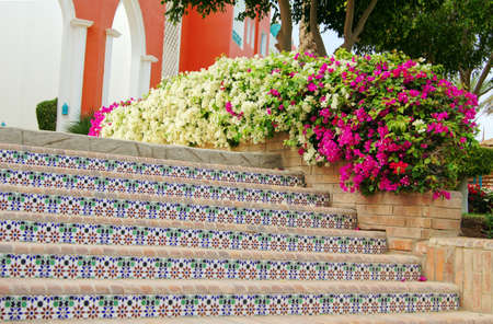 Traditional arabic architecture surrounding exotic plants