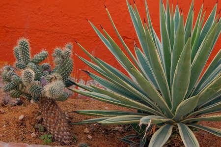 Closeup of cactus plant in wild nature Stock Photo