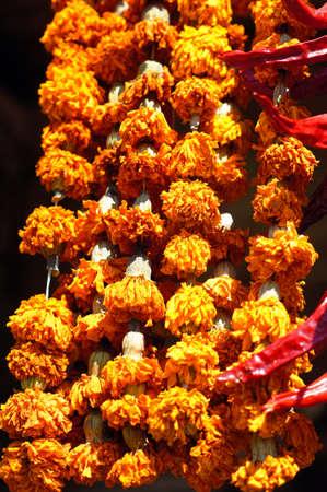 intense flavor: Closeup of saffron dried flowers - famous georgian spice Imereti saffron