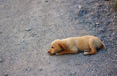Little dakloze hond buiten Stockfoto - 17654689