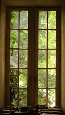 Old window with fresh green leaves outdoor photo