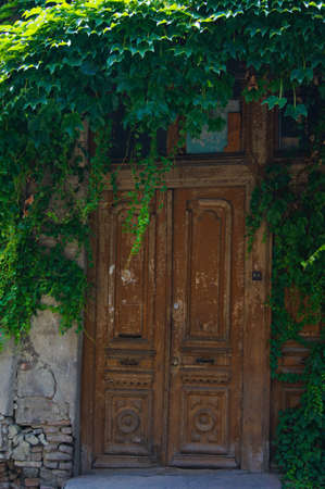 Old building and door covered with ivy plant photo