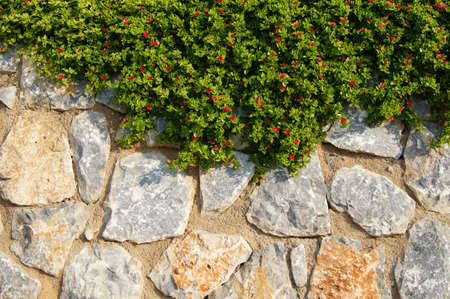 Stone wall with bright green plant over it Stock Photo - 22019675
