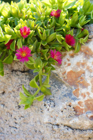 Stone wall with bright green plant over it Stock Photo - 22073339