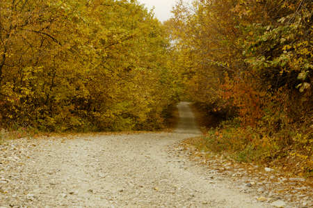 road autumnal: Road in the foggy autumnal forest
