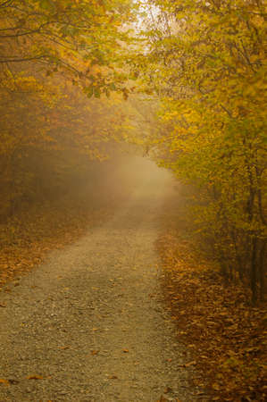 Road in the foggy autumnal forest photo
