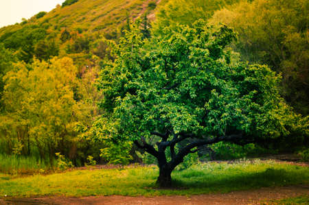 peacefulness: solitary tree on grassy hill in the forest Stock Photo