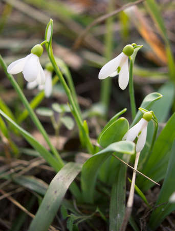 glowering: First spring flowers in the forest Stock Photo