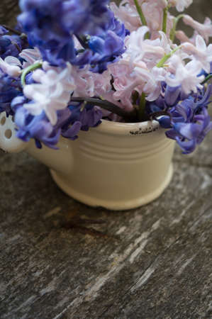 Hyacinth in an old clay vase with waterdrops and on a old piece of wood for a rustic look. photo