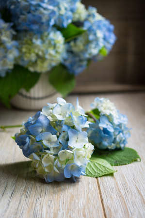 Blue pastel color hydrangea flowers on wooden table