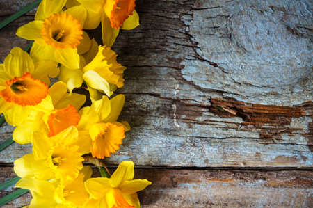 Yellow daffodill flower on the old wooden table photo