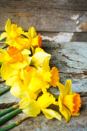 jonquil: Yellow daffodill flower on the old wooden table Stock Photo