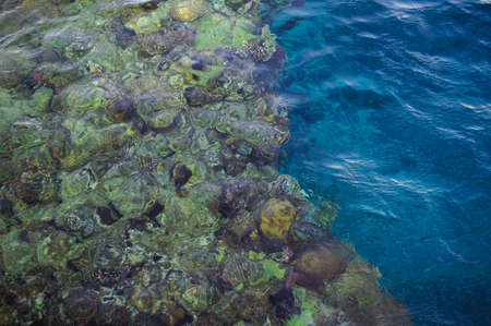 Coral reef with fish and corals in te sea photo