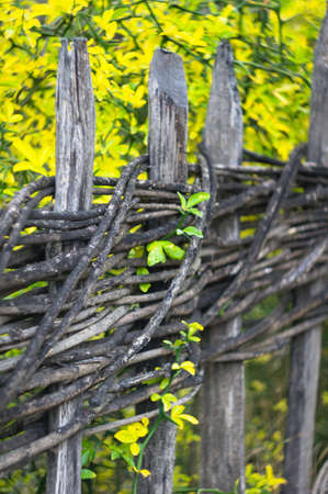 ethnographical: Autumn time: rural view with very old fence with yellow leaves and snow in Tbilisi Open-air ethnographical museum