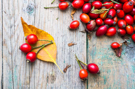 wild rose: Wild rose hips and autumna yellow leaves on the rustic background