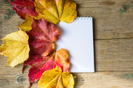 rea: Rea and yellow autumnal leaves of ivy lant and empty paper on wooden background Stock Photo