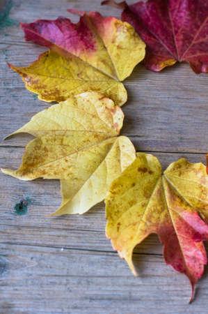 Plantas Otoales. Color With Plantas Otoales. Cool Plantas Otoales ...