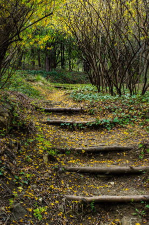 rudimentary: Old wooden stairs in the spring time garden Stock Photo
