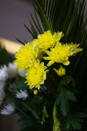 Yellow aster flowers in a vase