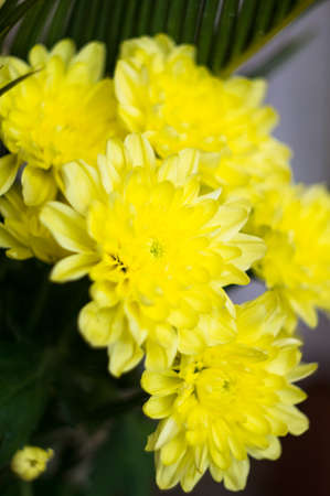 aster flowers: Yellow aster flowers in a vase
