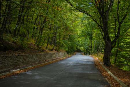 Road in rainy autumnal landscape in Caucasus mountain in Kakheti, wine region of Georgia Stock Photo