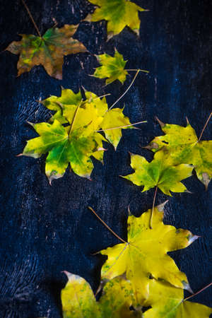 Autumnal flatlay with bright yellow leaves and berries on rustic background with copyspace