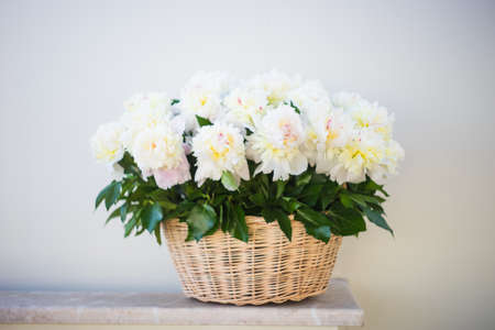 Rustic busket with beautiful white peony flowers