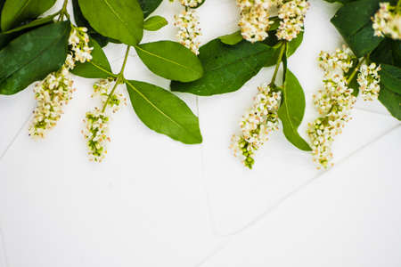 White flowers on white concrete background with copy space as a floral concept Stock fotó