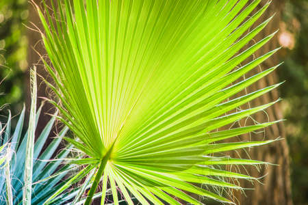 Palm tree leaves as a tropical background with copy space