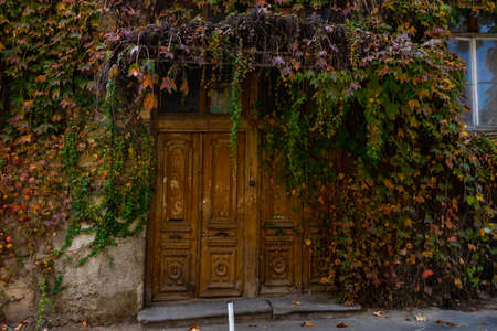 Door in old house covered with autumnal wild grape leaves in Tbilisi
